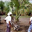 1996_palm_process_01