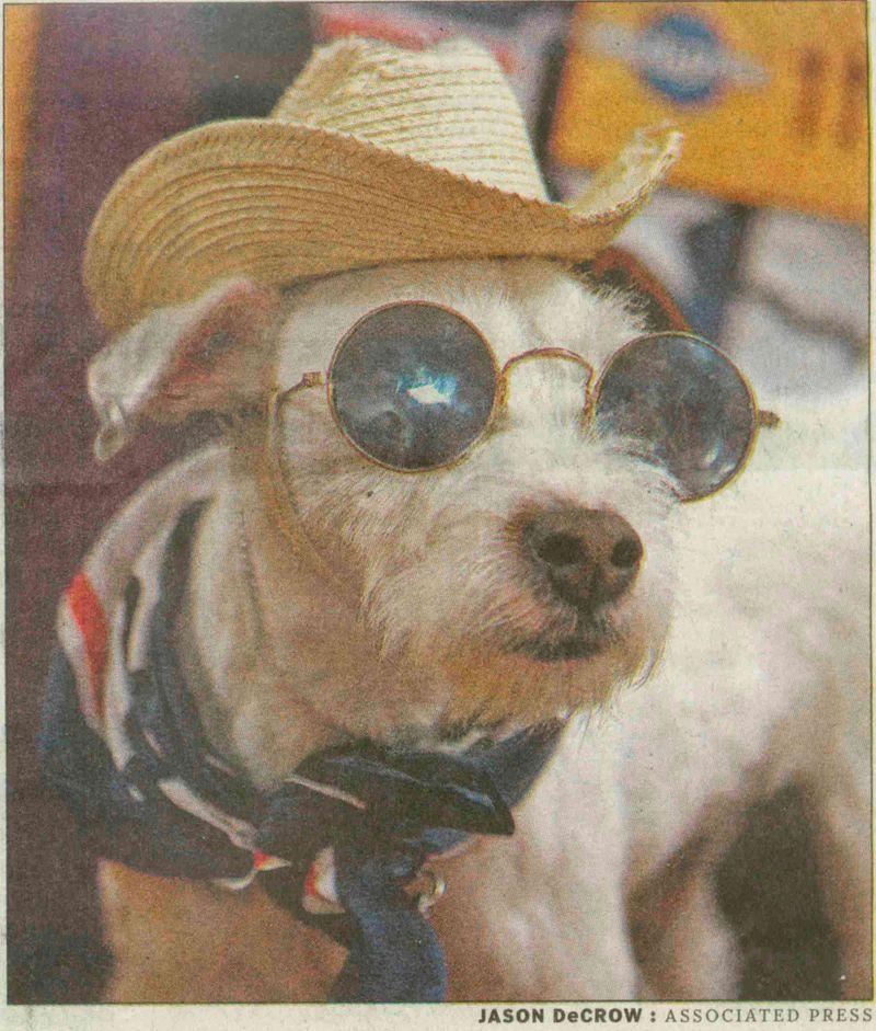 2008_Dog